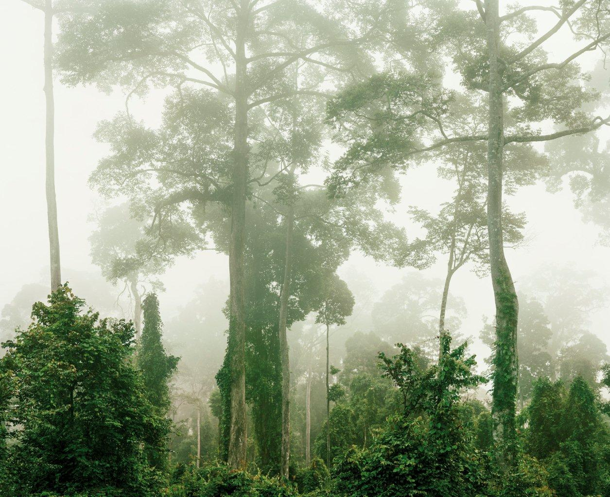 olaf-otto-becker-primary-forest-malaysia
