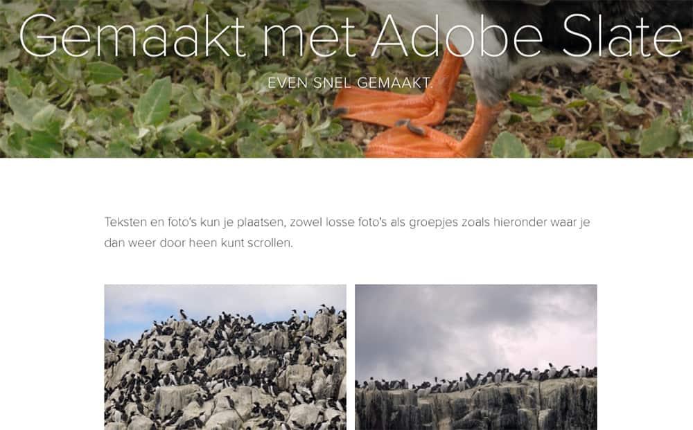 Een presentatie gemaakt met Adobe Slate, een gelikte weergave van foto's en tekst op het internet.