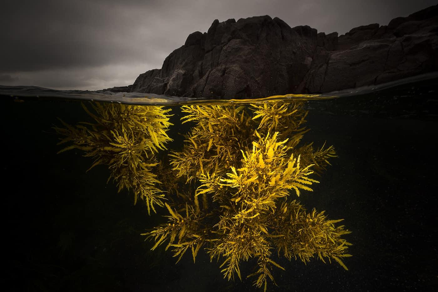 A Splash of Yellow - Foto Matthew Smith