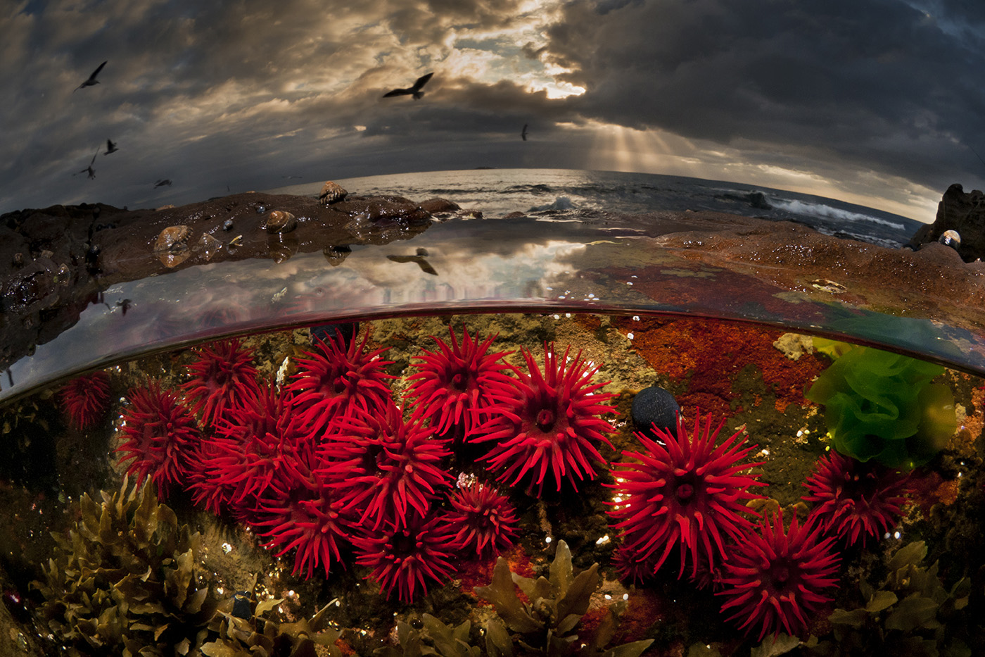 Crimson Dawn - Foto Matthew Smith