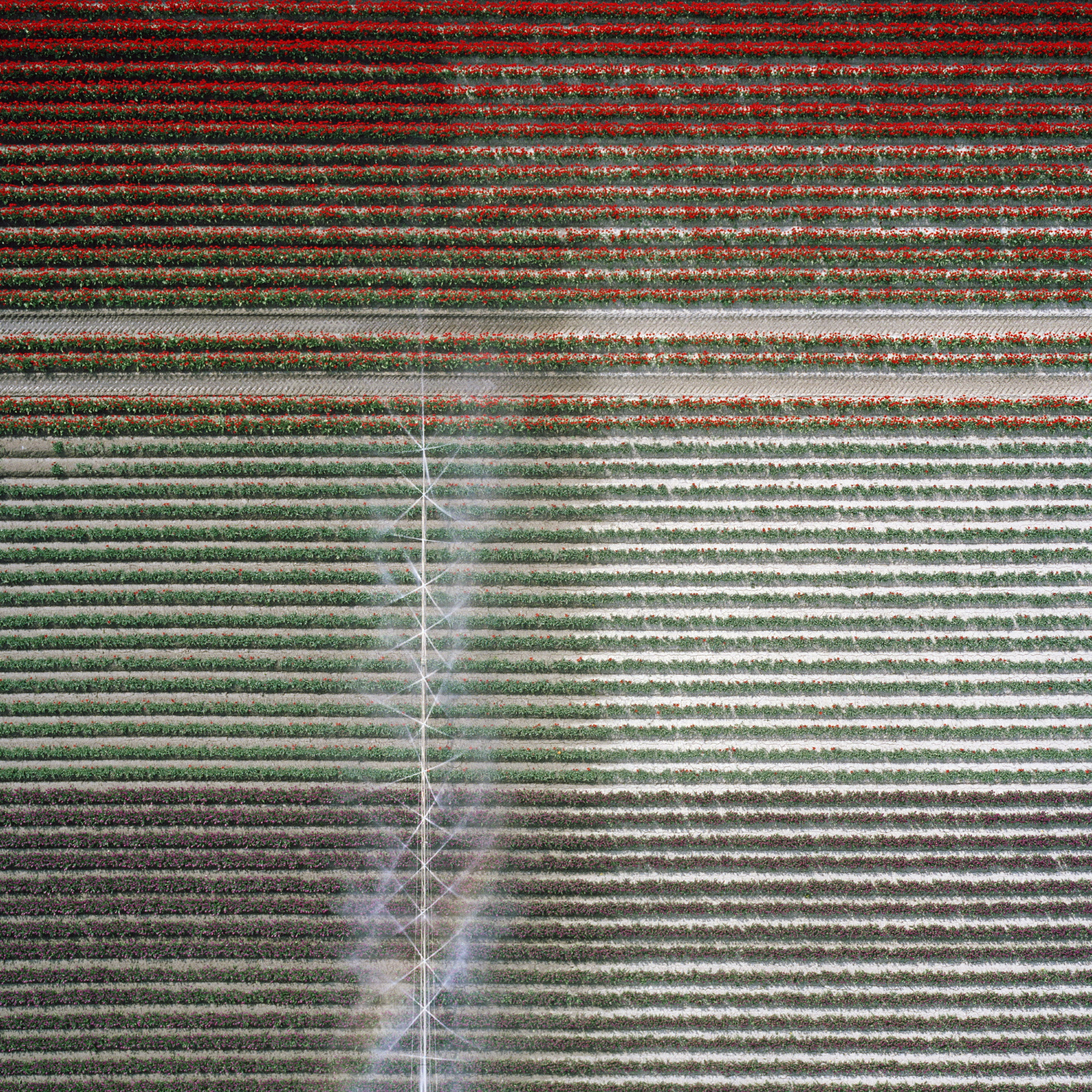 Untitled 2011 110x110cm