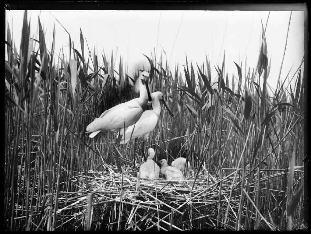 Richard Tepe / Nederlands Fotomuseum