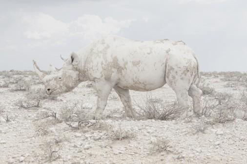 Rhino by Maroesjka
