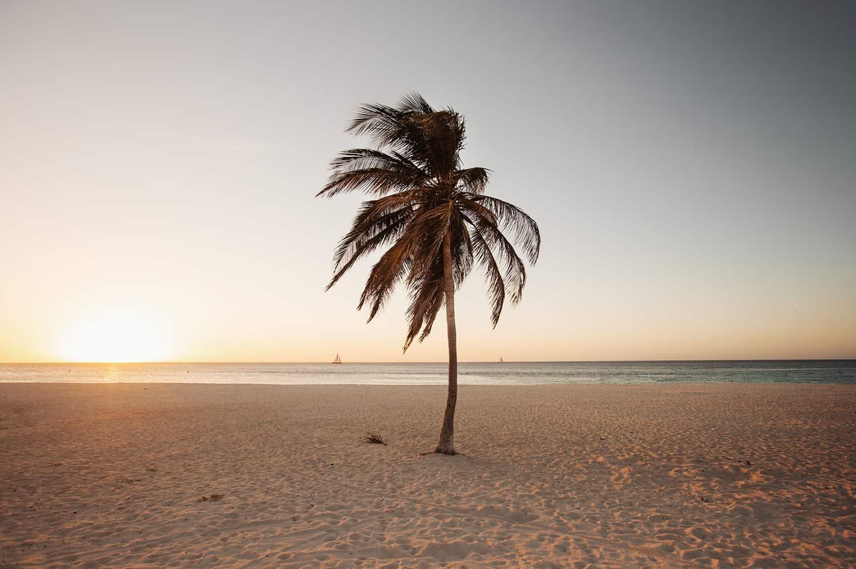 Foto Claire Droppert (onderdeel van Tropical Silence)
